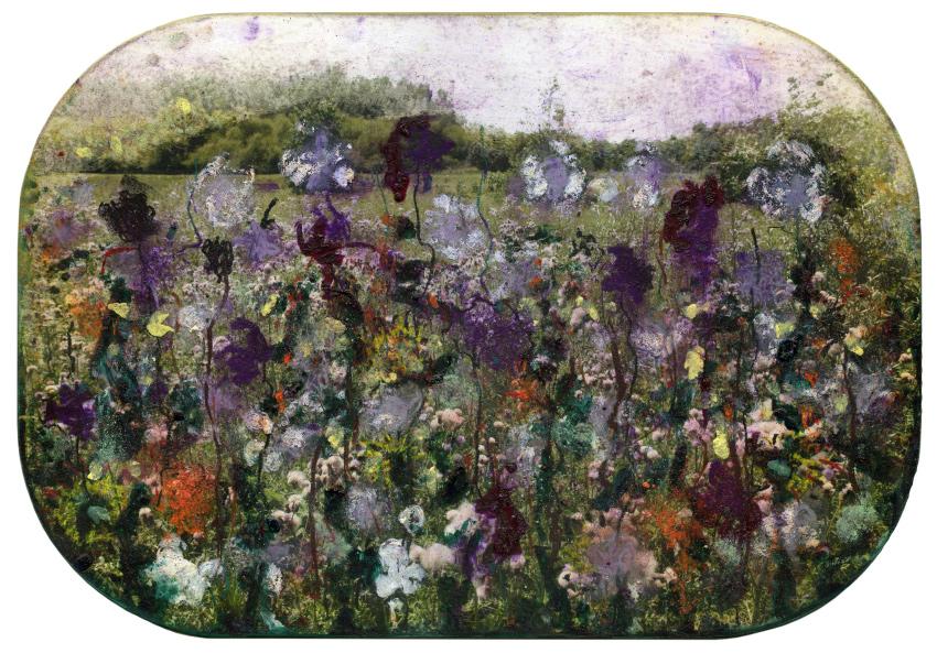 Distelveld met paars