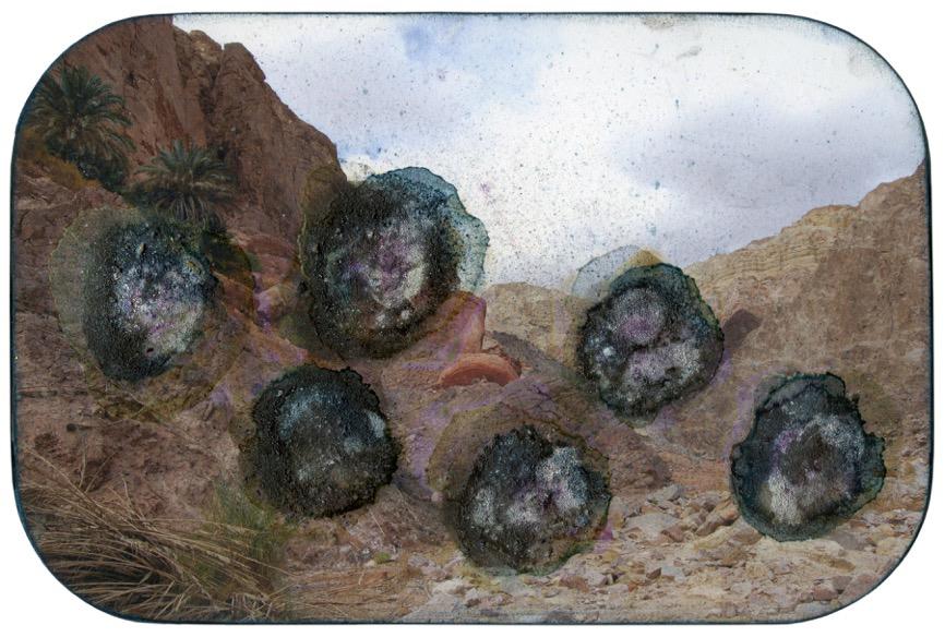 Sinai palmen